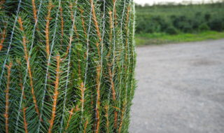 Infinity Christmas Trees - Netting